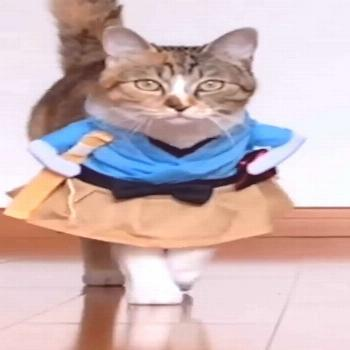 Funny Cat Costumes High quality: Made of high-quality material, keep your pet feel comfortable all-