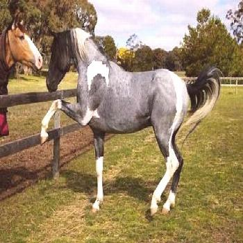 Ok so I might collect horses in unique colors. Hope that's cool. (Note: JESUS CHRIST PEOPLE, THAT C