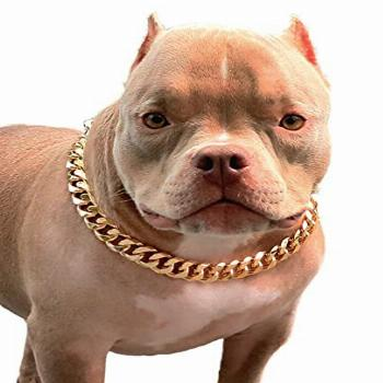 PP COLOR Gold Chain Dog Collar-3/4 Width Cuban Link Dog