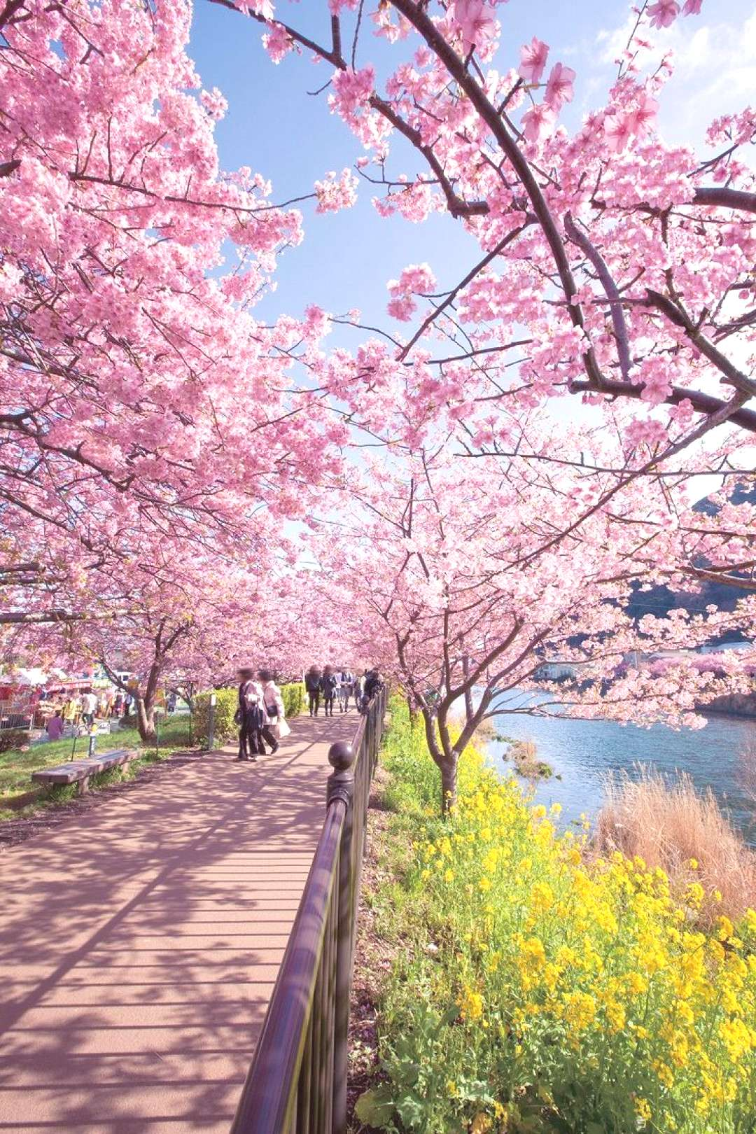 5 Amazing Places to Visit in Japan.You should definitely go there!