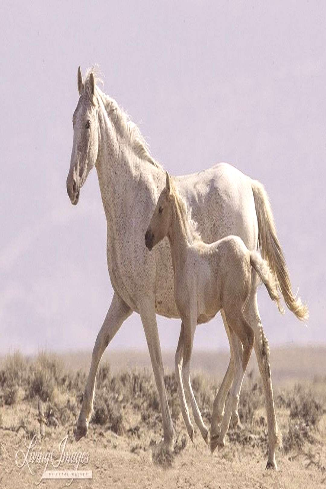 """Wild Horse Photography """"Wild Mare amp Palomino Pinto Foal Together"""" Wild Horse Wall Art Palomino"""